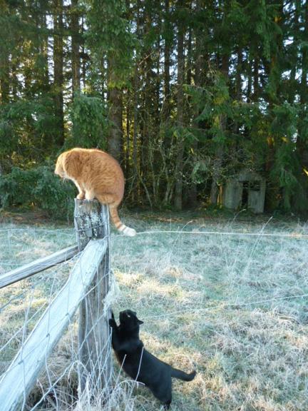 Ice cats
