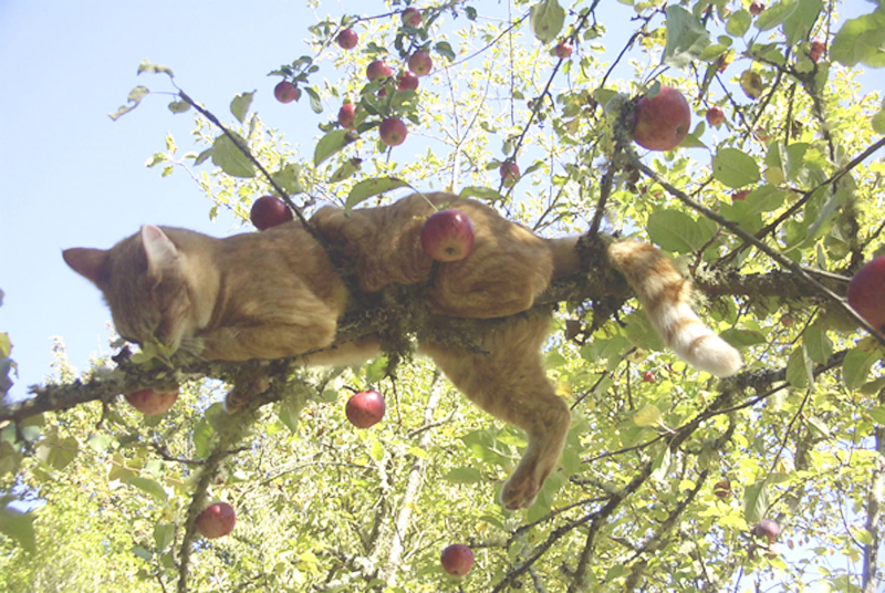 Remy picking apples