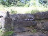 Daniel cat-napping on stone wall